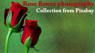 Download Video সুন্দর গোলাপ ফুলের ছবি Rose flower photography collection from Pixabay MP3 3GP MP4