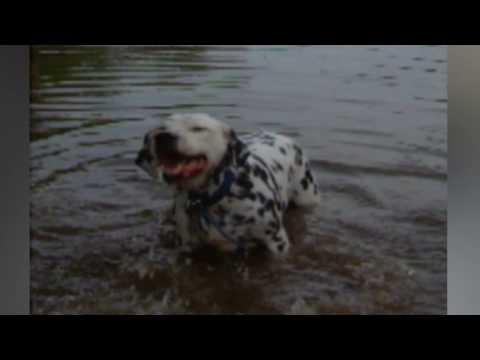 Sneezing Baby Pandas & More Sneezy Pet & Animal Videos Weekly Compilation | Kyoot Animals