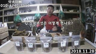 상황버섯, 상황버섯먹는법, 자연산상황버섯 올바른복용법