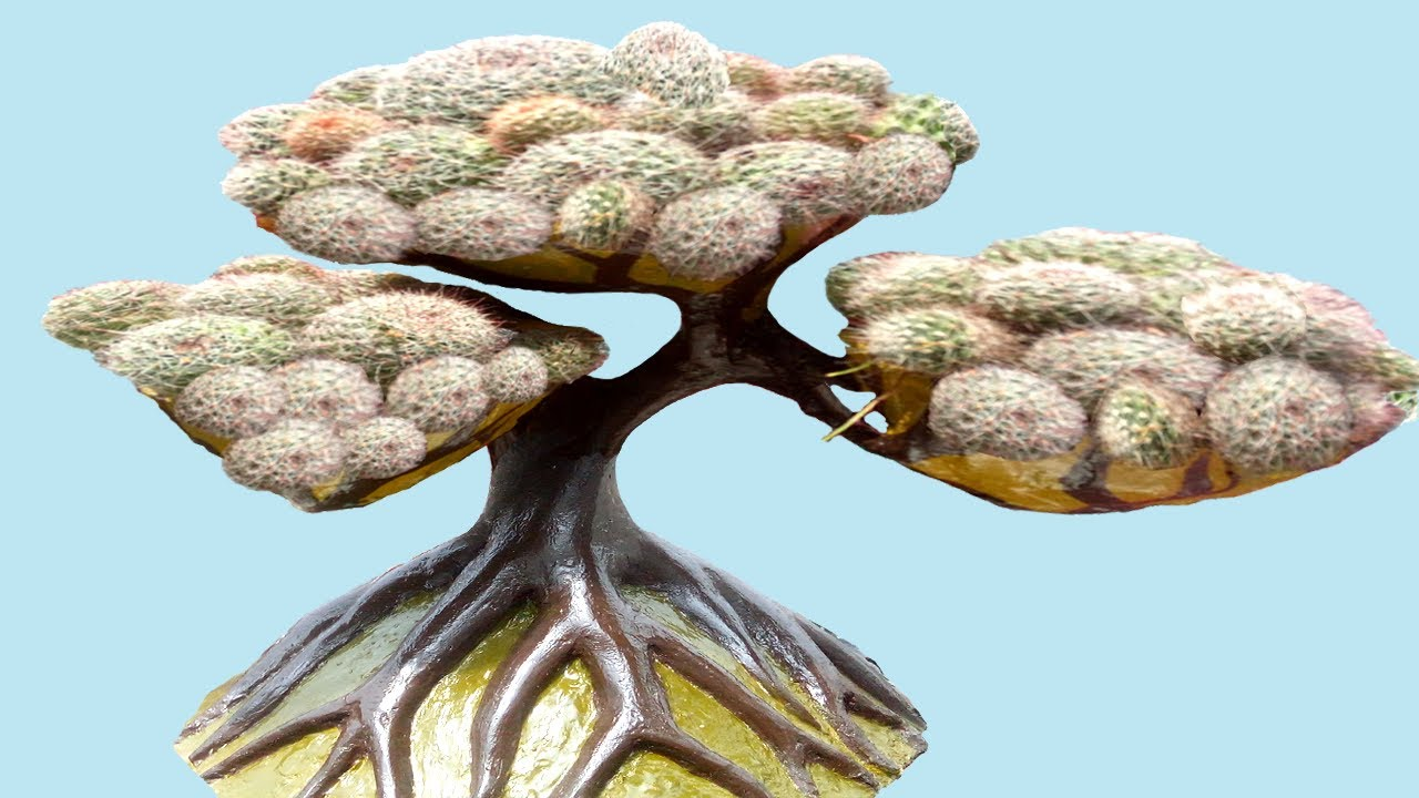 Cactus || Repotting in a Fancy Tree Pot ( innovative idea )