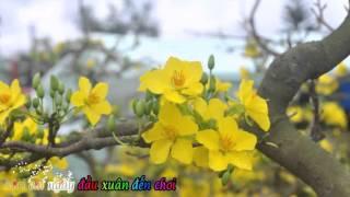 Share Sub Những ngày xuân rực rỡ - Noo Phước Thịnh