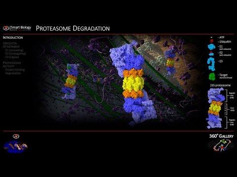 Proteasome Animation 3D Molecular Biology