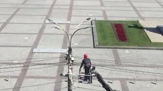В Воронеже спасли стрижа, застрявшего в столбе в центре города