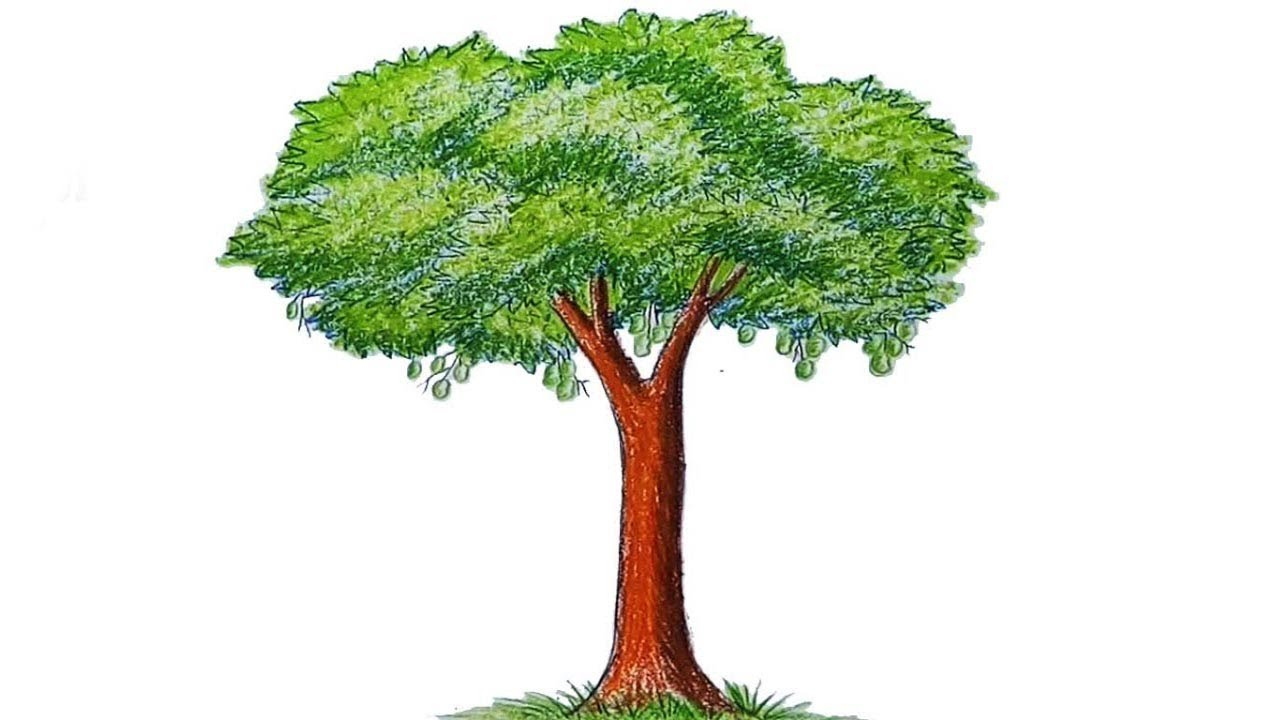How to draw a Mango tree step by step - YouTube