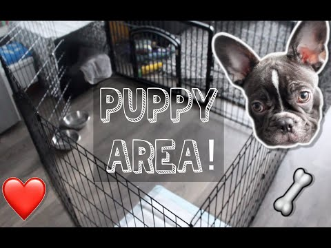 FRENCHIE Puppy Area! | Crate & Playpen