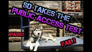 SERVICE DOG PUBLIC ACCESS TEST TRAINING!!! | DexterTheGermanHusky