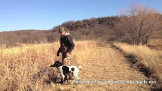 Hunting Dog Training - Retrieving On Land And Water