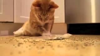 Кот нашел кошачью мяту!