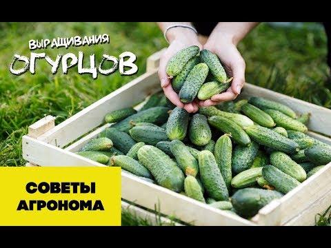 Советы для выращивания огурцов (05-01-2018)