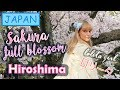 Japan Vlog #18: SAKURA at FULL BLOSSOM  in HIROSHIMA | Honey in JAPAN  | Spring 2018