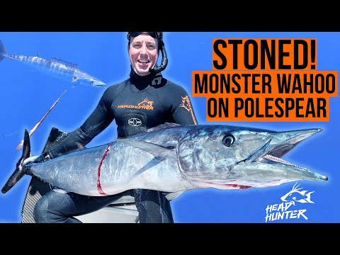 60 Lb Wahoo STONED With A Pole Spear