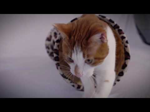 Save a Bob or Two - MedicAnimal co-founder discusses the film A Street Cat Named Bob