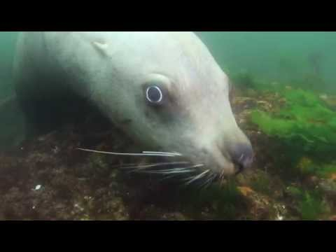 Sea Lion Dive and Marine Adventure Tour - Vancouver Island