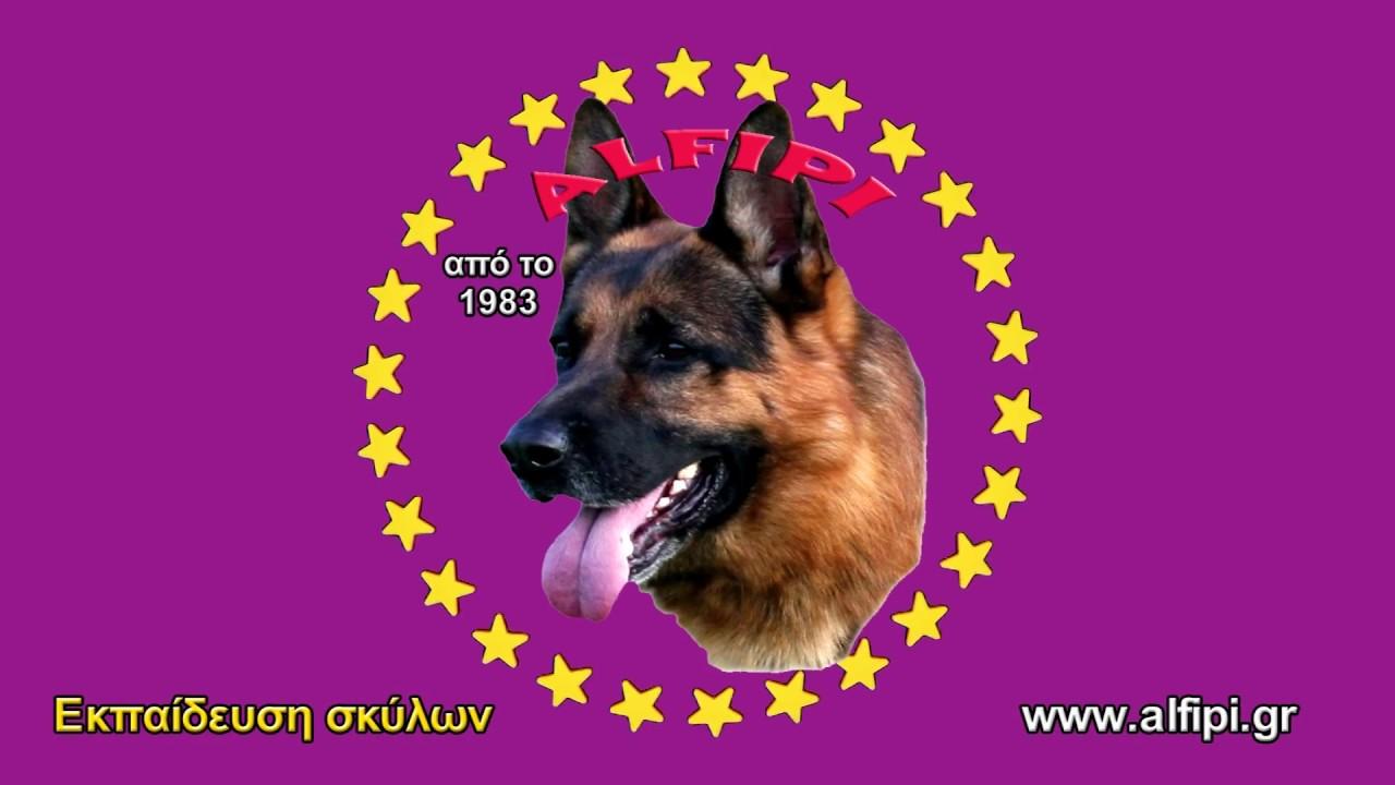 Εκπαίδευση σκύλων Εύβοια Dogo Argentino Αλέκος Φιλιππής