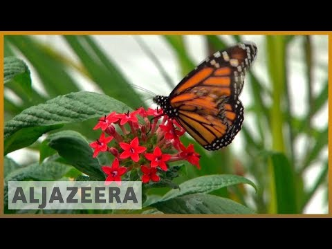 World faces catastrophic risks over insects' road to extinction | Al Jazeera English