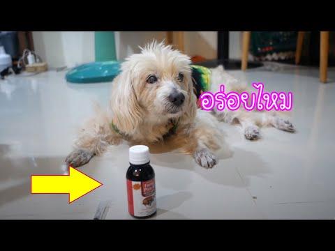รีวิววิตามินบำรุงเลือดบำรุงเลือด หัวใจ สำหรับหมาป่วย l love dog
