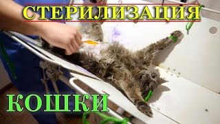 видео Стерилизация кошки