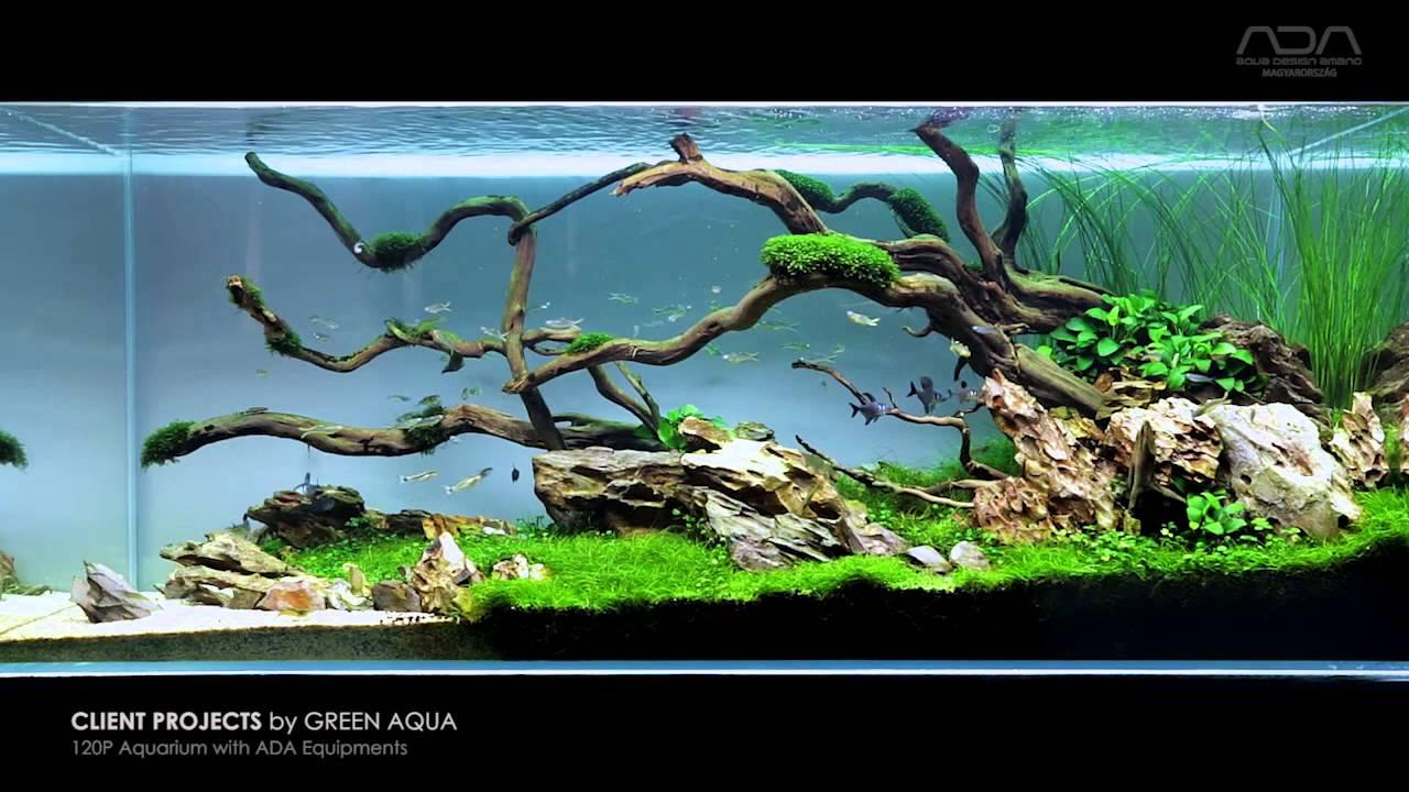 Aquascape Project By Green Aqua Limited Aquarium Plants For Ziolite Dan Minimalist View Youtube