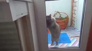За стеклом.  Кошку забыли на балконе.