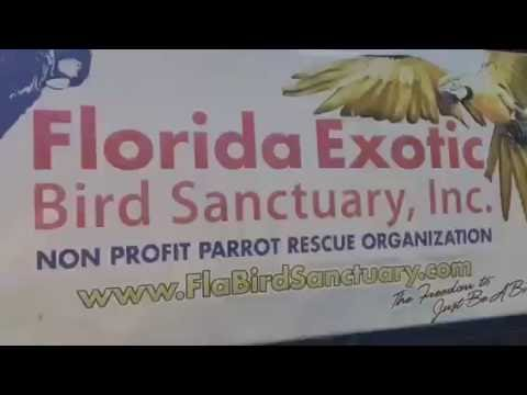 Tour of The Florida Exotic Bird Sanctuary - Hudson, FL