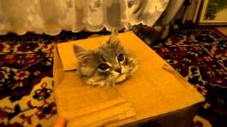 кот в коробке(кот в коробке., 2013-03-17T16:35:45.000Z)