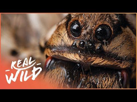 Scary Animals: Super Creeps [Animal Phobia Documentary]   Wild Things