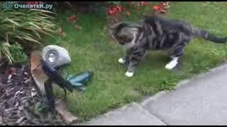 Кошка и игрушка лягушка