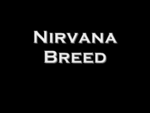 Nirvana: Breed with Lyrics