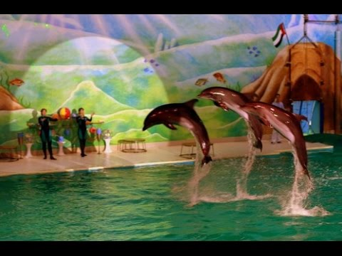 Dolphin show in Dubai Creek Park