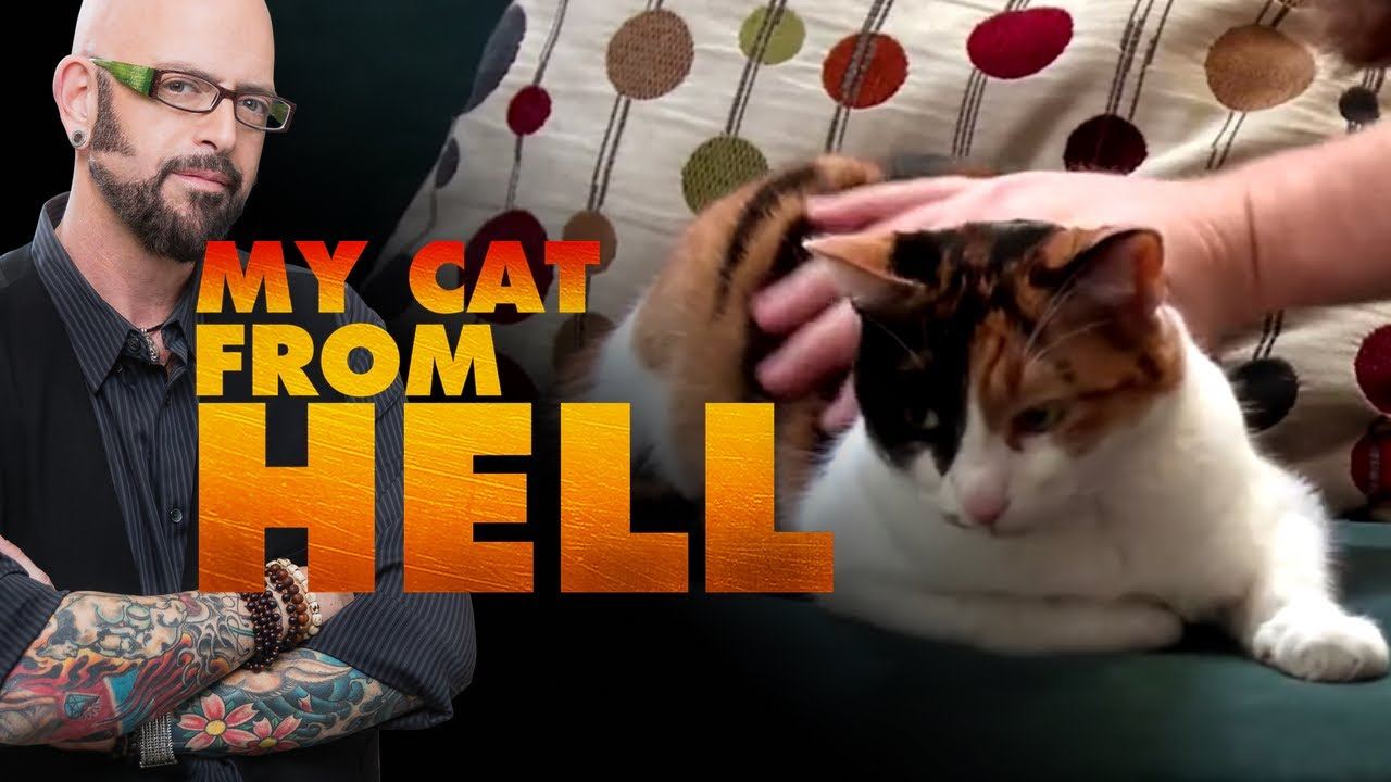 my cat from hell deaf blind and biting