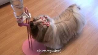 h2au - Bebedouro PET Resistente pra Cachorro! //Maltês Lhasa Apso Shih Tzu//