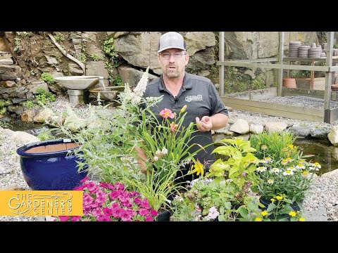 7/22/2021 Deadheading Annuals and Perennials with Sean