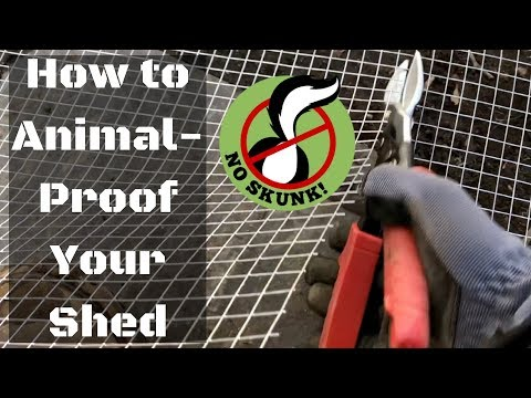 how-to-animal-proof-a-shed-(skunk/possum/raccoon/rodent/groundhog/squirrel)