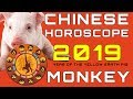 Chinese Horoscope 2019 Monkey