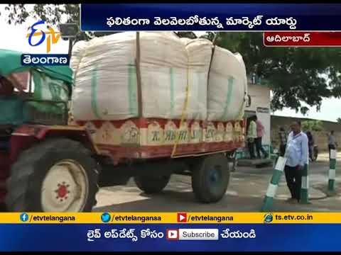 Cotton Price decreases In Adilabad Market Yard