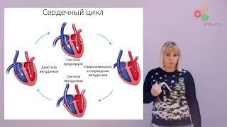 физиология человека и животных. Строение и автоматия сердца (Зыбина А. М.)