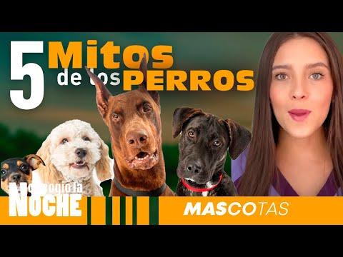 5 Mitos Sobre Los Perros - Lauvet