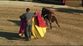 Auf Leben und Tod   Ein Stier sieht rot