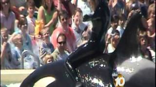 Orlando SeaWorld Trainer Killed - 10News Investigates the History of Killer Whale Attacks