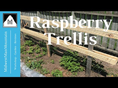 Vertical Gardening Raspberry Trellis Youtube