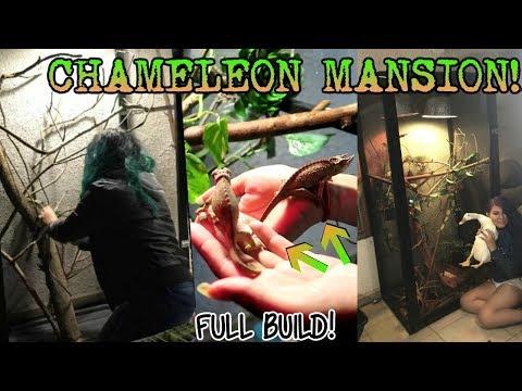 I BUILT A MANSION FOR MY CHAMELEONS! (full build)