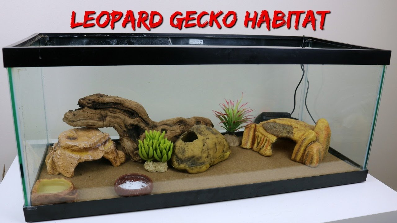 SETTING UP MY LEOPARD GECKOu0027S NEW HABITAT