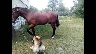 Собака Рекс дресирує коня.    Rex dog trains a horse.