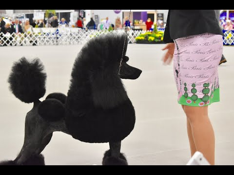Poodle Club of America National Specialty 2018 Standards