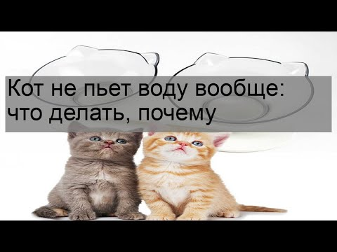 Вопрос: Домашний кот на натуралке почти не пьёт воду, допаивать?