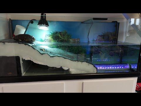 Aquarium pour tortue : Partie 2 L'Aquaterrarium