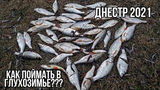 Рыбалка на ПЛОТВУ в глухозимье Ловля на ПОПЛА ПОППЕР Днестр Маяки