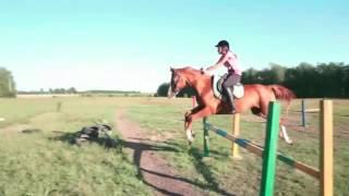 Конный спорт|Клип про лошадей