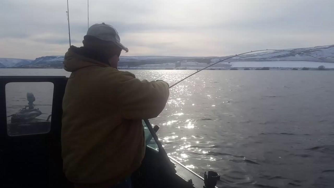 Walleye fishing columbia river youtube for Columbia river fish counts