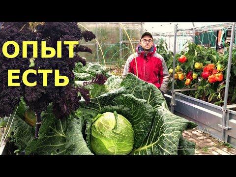 Октябрь В ОГОРОДЕ ПОДМОСКОВЬЯ. Урожай ПРОБНЫХ посадок.